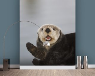 A Sea Otter In Prince William Sound wall mural