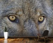 Eyes Of A Gray Wolf wall mural kitchen preview