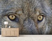 Eyes Of A Gray Wolf wall mural living room preview
