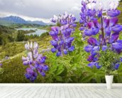 Lupine Flowers Near Lost Lake Seward wall mural in-room view