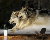 Pack Of Grey Wolves Running Through Deep Snow 2 wallpaper mural kitchen preview