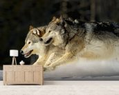 Pack Of Grey Wolves Running Through Deep Snow 2 wallpaper mural living room preview