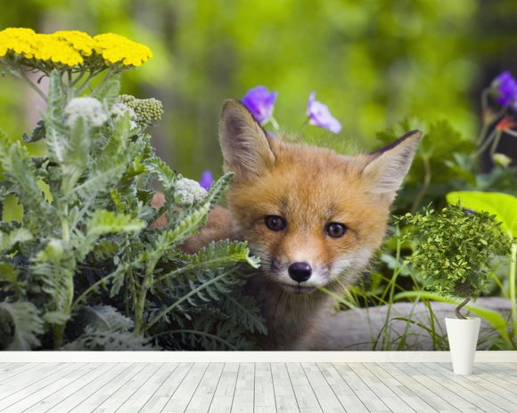 Red Fox Kit In Spring Wildflowers Minnesota wallpaper mural room setting