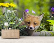 Red Fox Kit In Spring Wildflowers Minnesota wallpaper mural living room preview
