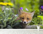 Red Fox Kit In Spring Wildflowers Minnesota wallpaper mural in-room view