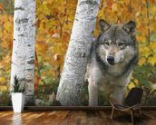Wolf In Forest Autumn - Minnesota mural wallpaper kitchen preview