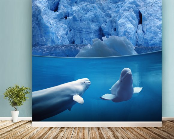 Belugas Underwater wallpaper mural room setting