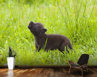Young Wolf Pup In Meadow mural wallpaper