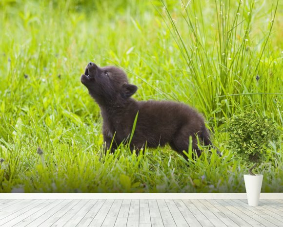Young Wolf Pup In Meadow mural wallpaper room setting