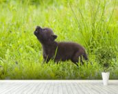 Young Wolf Pup In Meadow mural wallpaper in-room view