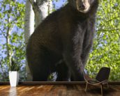 Black Bear Cub In Tree Minnesota Forest wallpaper mural kitchen preview