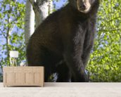 Black Bear Cub In Tree Minnesota Forest wallpaper mural living room preview