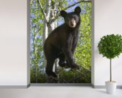 Black Bear Cub In Tree Minnesota Forest wallpaper mural in-room view