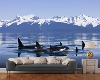 Orca Surface's In Lynn Canal mural wallpaper