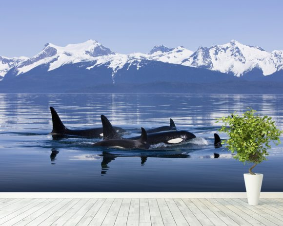 Orca Surface's In Lynn Canal mural wallpaper room setting