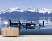 Orca Surface's In Lynn Canal mural wallpaper living room preview