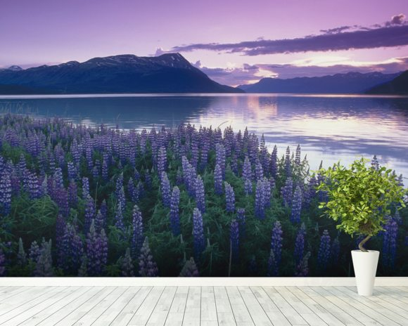 Sunset Turnagain Arm Field Of Lupine wallpaper mural room setting