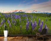 Lupine Along Turnagain Arm wallpaper mural kitchen preview