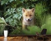 Kit Red Fox Peering Through Bushes wallpaper mural kitchen preview