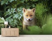 Kit Red Fox Peering Through Bushes wallpaper mural living room preview