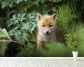 Kit Red Fox Peering Through Bushes wallpaper mural in-room view