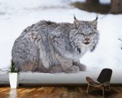 Canada Lynx mural wallpaper kitchen preview