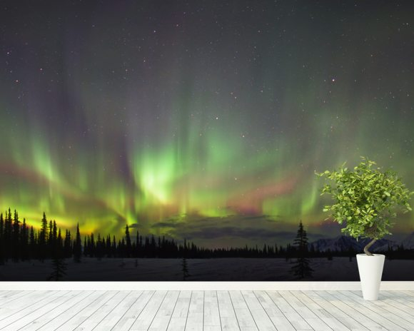Northern Lights And Spruce Trees In Broad Pass wallpaper mural room setting