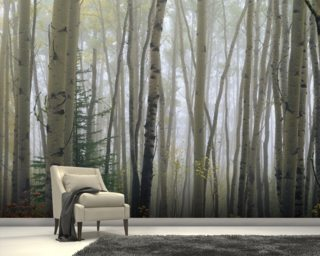 Foggy Aspen Forest Near Ester Interior Wall Mural Wall Murals Wallpaper