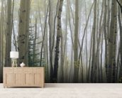 Foggy Aspen Forest Near Ester Interior wall mural living room preview