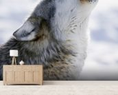 Gray Wolf Howling in Winter wall mural living room preview