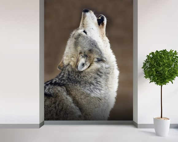 Gray Wolf Howling Portrait wallpaper mural room setting