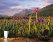 Wild Iris Blooming In Front Of Pioneer Peak wall mural kitchen preview