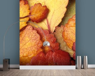 Dwarf Birch Leaves Mural Wallpaper Wall Murals Wallpaper