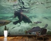 Grizzly Bear Swimming After Spawning Salmon mural wallpaper kitchen preview