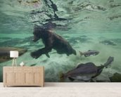 Grizzly Bear Swimming After Spawning Salmon mural wallpaper living room preview