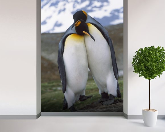 King Penguin Pair - Mating Behavior wall mural room setting