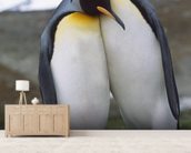 King Penguin Pair - Mating Behavior wall mural living room preview