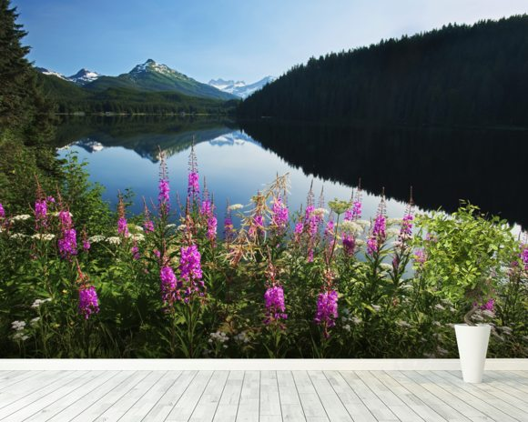 Auke Lake On A Clear Day With Fireweed wallpaper mural room setting