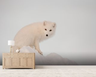 Arctic Fox on Top of a Large Chunk of Ice Mural Wallpaper Wall Murals Wallpaper