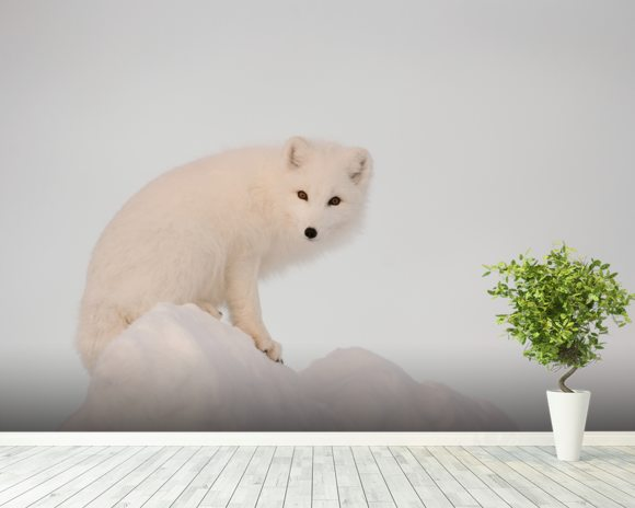 Arctic Fox on Top of a Large Chunk of Ice wall mural room setting