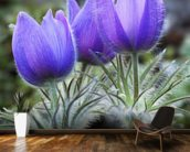 Pasque Flowers (Spring Crocus) wallpaper mural kitchen preview