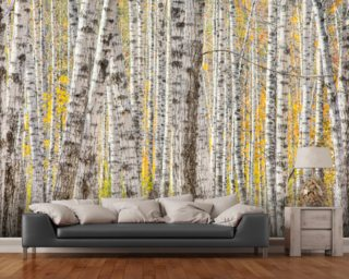 A Poplar Tree Forest In Autumn wall mural
