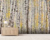 A Poplar Tree Forest In Autumn wall mural living room preview