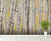 A Poplar Tree Forest In Autumn wall mural in-room view