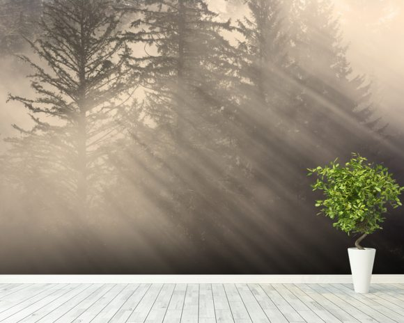 Morning Rays Shine Through the Mist wallpaper mural room setting