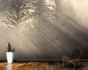 Morning Rays Shine Through the Mist wallpaper mural kitchen preview