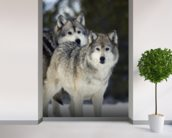Gray Wolves in Winter at Grizzly and Wolf Center mural wallpaper in-room view