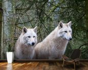 White Wolf Pair at the Woodland Park Zoo in Seattle wallpaper mural kitchen preview