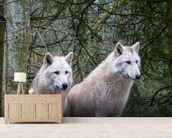 White Wolf Pair at the Woodland Park Zoo in Seattle wallpaper mural living room preview