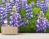 Field Of Lupine Near Seward, Southcentral Alaska wallpaper mural living room preview